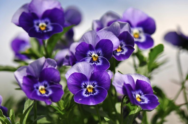 Fall is a great time to plant pansies and other flowering plants.