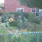 Harper-School-garden