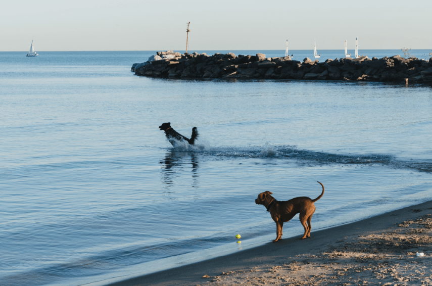 dog-beach-compressor